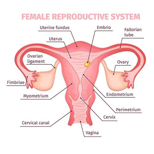Mirena for Endometriosis caused heavy bleeding, does that work?